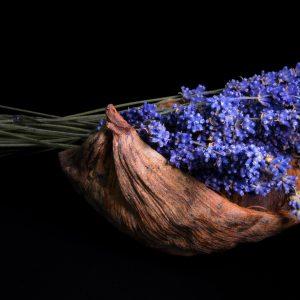 lavender-2541383_1920